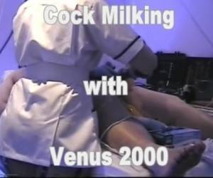 Cock Milking With Venus 2000 Milking Machine
